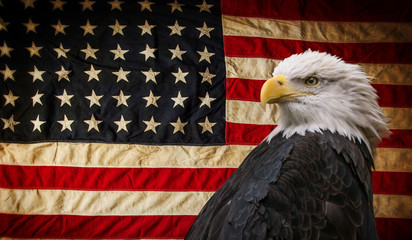 Fototapete - American Bald Eagle - symbol of america -with flag. United States of America patriotic symbols.