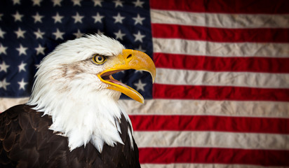 Wall Mural - American Bald Eagle - symbol of america -with flag. United States of America patriotic symbols.