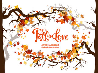 Wall Mural - Fall maple leaves for decoration.