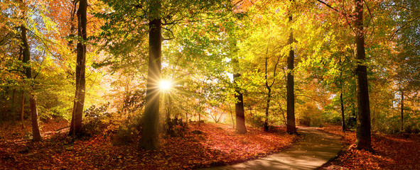 Printed roller blinds Autumn Sunlit path in a park before sunset