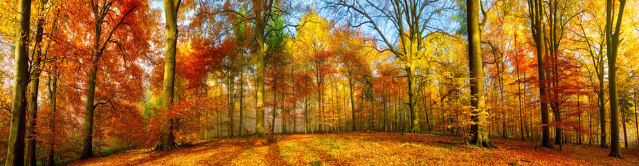 Poster Autumn Colorful forest panorama in autumn
