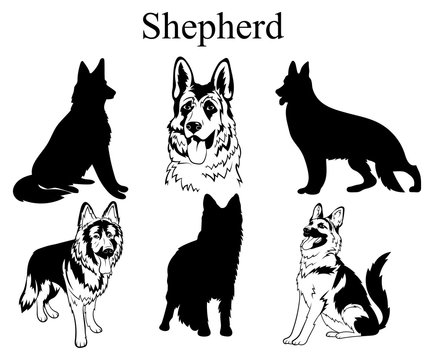 Shepherd set. Collection of pedigree dogs. Black and white illustration of a shepherd dog. Vector drawing of a pet. Tattoo.
