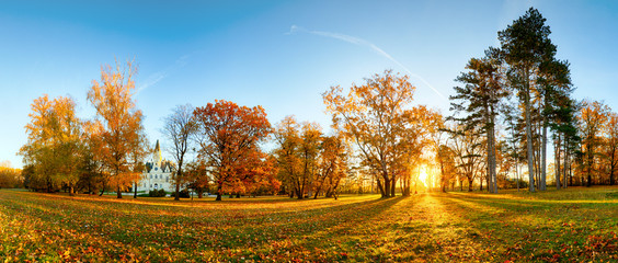Panorama of autumn tree in forest park at sunset