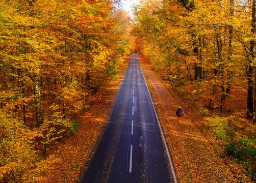 Autumn Road