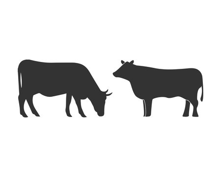 Cow graphic design template vector isolated illustration