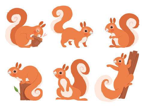 Cute squirrel. Zoo little forest animals in action poses wildlife squirrel vector cartoon character. Funny character squirrel in various pose illustration