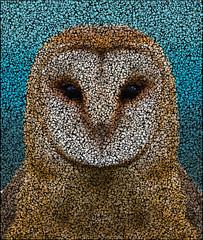 Owl face dots