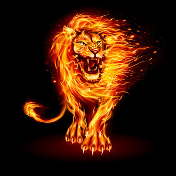 Abstract Illustration of Infuriated Lion with Fire Flames Fur in Orange Color on Black Background for Design