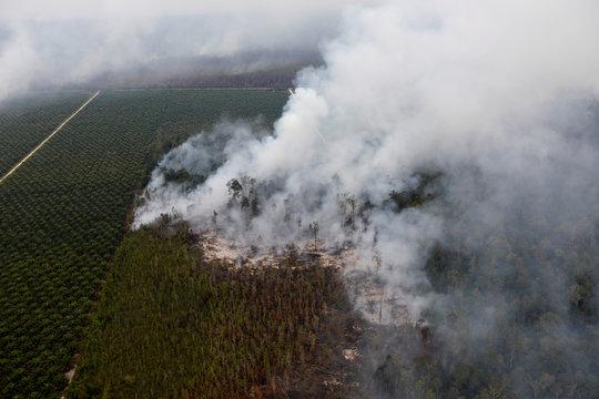 Smoke covers trees during fires next to palm oil plantation in Kapuas regency near Palangka Raya
