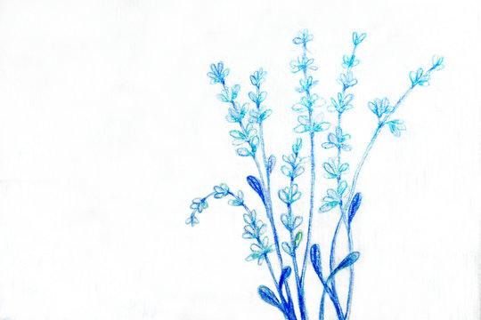 Blue flower or light blue flower on white background.Drawing color pencil
