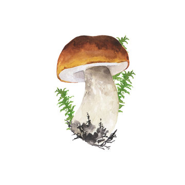 Wild forest mushroom and green herbs isolated on white background. Hand drawn watercolor illustration.