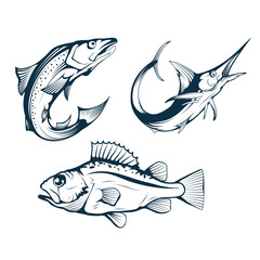 Salmon. Sea Perch and Marlin. Symbols of Fishery Sport. Seafood Symbols. Salmon, Sea Bass and Marlin for Fishing Design. Fishing Logo. Sea Fish. Vector graphics to design.