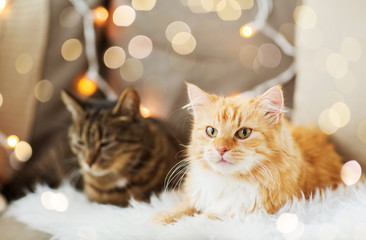 Fototapete - pets, christmas and hygge concept - two cats lying on sofa with sheepskin at home in winter