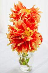 Vibrant orange garden dahlias in a glass vase on a windowsill.