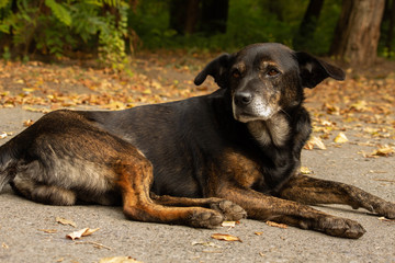 Sad dog in the street, autumn nature