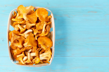 Group of edible forest chanterelle mushrooms in a wooden box of veneer on a blue wooden background. Place for text, copy space