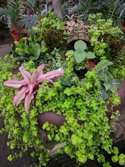 Arrangement of plants (creeping Jenny, Earth Star Plant, fittonia) to form a miniature garden