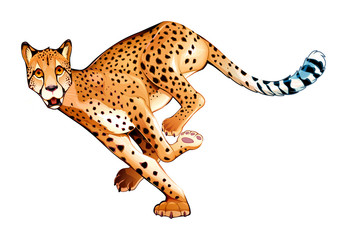 Running cheetah in horizontal pose