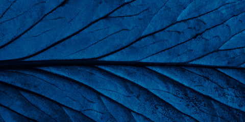 Bright blue top view with veins minimalistic background. Floral backdrop concept. Flower petals close up. Floristry hobby. Web banner, greeting card idea Wall mural