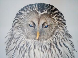 portrait of an owl Fototapete