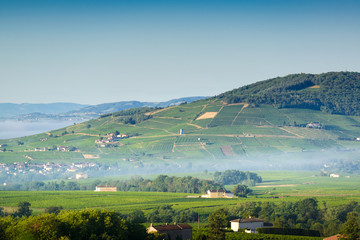 Brouilly hill and vineyards, Beaujolais, France