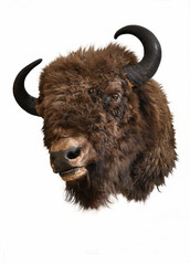 Deurstickers Bison European bison head trophy