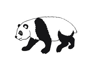 Vector black hand drawn sketch doodle panda isolated on white background