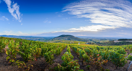 Landscape of Brouilly mountain and vineyards, Beaujolais, France