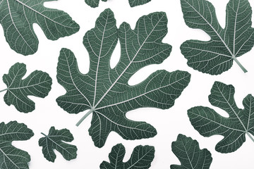 Fig leaves on white background