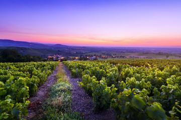 Photo sur Plexiglas Lilas Sunrise is coming over vineyards of Beaujolais and Salles Arbuissonnas village, France