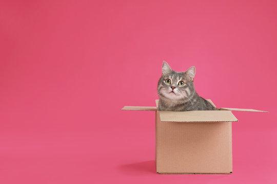 Cute grey tabby cat sitting in cardboard box on pink background