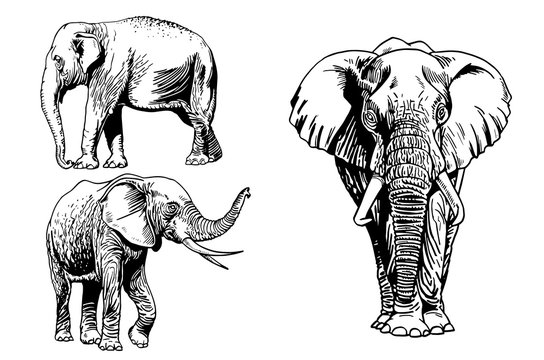 Graphical set of elephants isolated on white background,vector illustration for tattoo ,coloring and printing