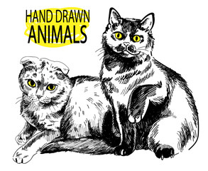 Two cats are sitting side by side. Drawing by hand in vintage style. Picture pen.