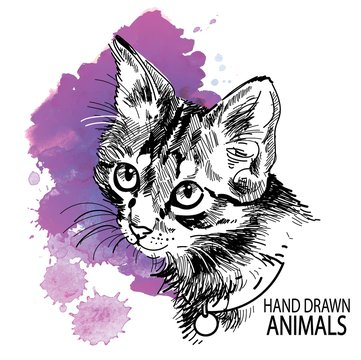 cat head freehand drawing in vintage style. Cute kitten wearing a collar.