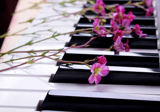 Little pink flowers on the piano keyboard