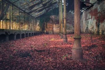 Croatia, Donji Miholjac, 11.2018. - Abandoned old greenhouse with ground covered with leaves