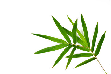 Fresh green bamboo leaves isolated on white background