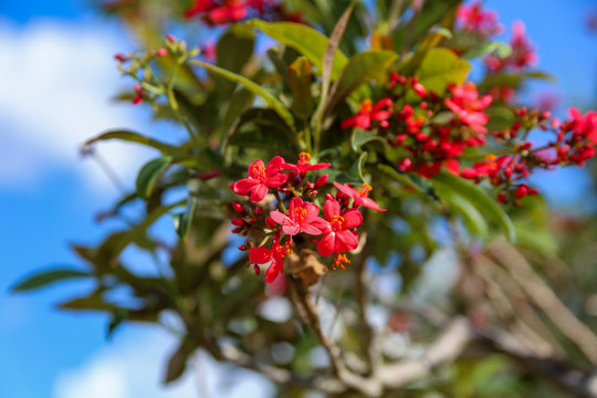 tiny red flowers on a tree in south Florida