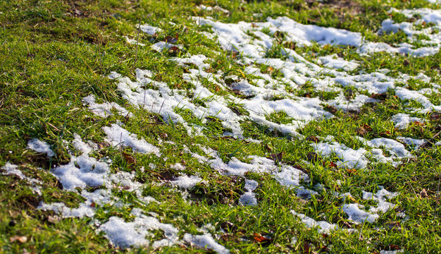Snow on the green grass in spring