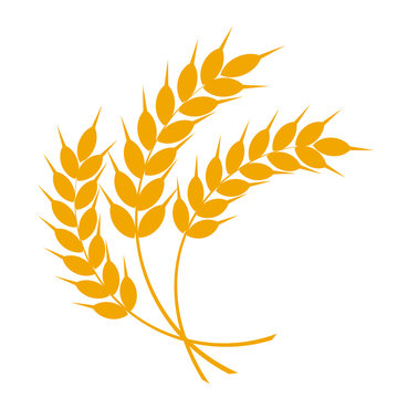 Wheat or barley ears. Harvest wheat grain, growth rice stalk and whole bread grains or field cereal nutritious rye grained agriculture products ear symbol. Isolated vector icon