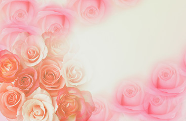Sweet color roses in soft style for background. Valentine's concept - Image