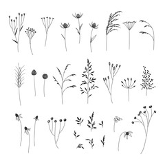 Fototapeta Hand drawn autumn floral illustrations collection on white background