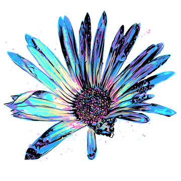 Anthophyta 056b - Hand painted African daisy flower illustration.  Turquoise blue, purple and magenta watercolour and black ink on a white background.