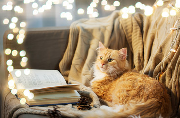 pets, christmas and hygge concept - red tabby cat lying on sofa with book and pinecones at home in winter