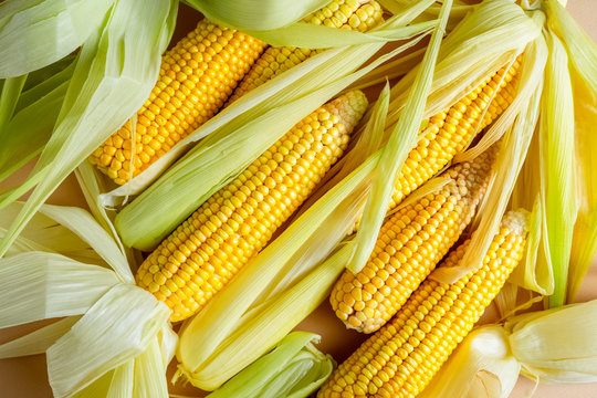 Closeup view of raw yellow corn cobs with leaves