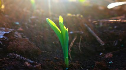 Corn seedlings with sunlight Thailand Fototapete