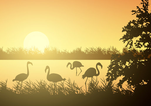 Realistic illustration of wetland landscape with river or lake, water surface and birds. Flamingo and stork flying under orange morning sky with rising sun, vector