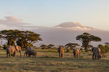 Elephants in front of Mount Kilimanjaro at Amboseli National Park in Kenya, Africa