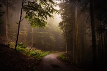 Tuinposter Weg in bos Détour