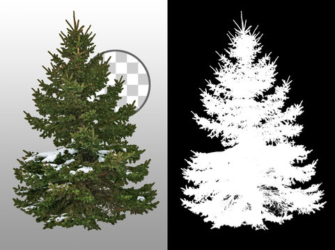 Snow covered fir tree in winter. Pine tree isolated on transparent background. High quality clipping mask for professional composition.